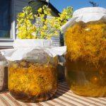 Cum se prepara vinul medicinal din flori de papadie