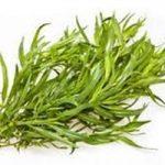 Tarhonul (Artemisia dracunculus)