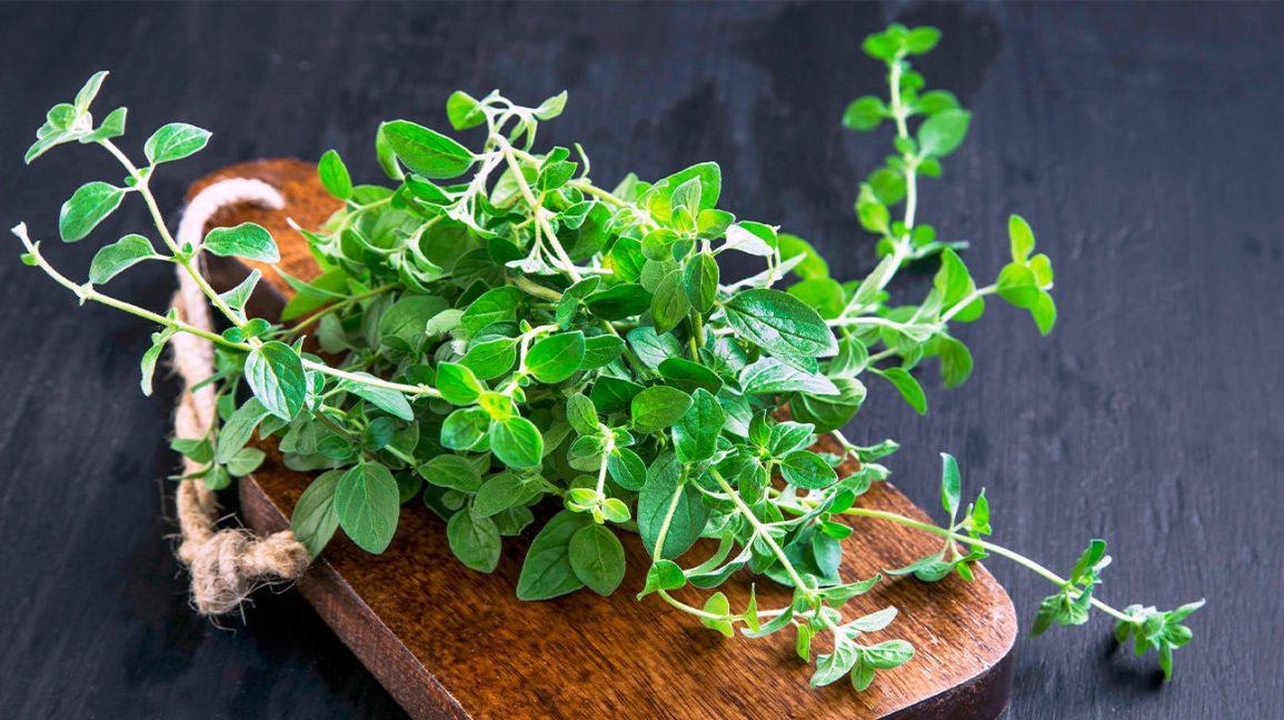 15 plante medicinale cu activitate antivirală impresionantă